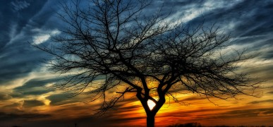 Enigmatic nature